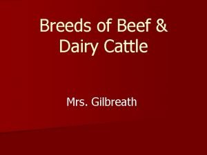 Breeds of Beef Dairy Cattle Mrs Gilbreath Today