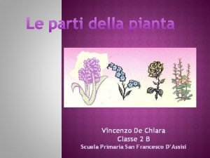 Le parti della pianta Vincenzo De Chiara Classe