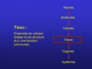 Atomes Molcules Tissu Cellules Ensemble de cellules dotes