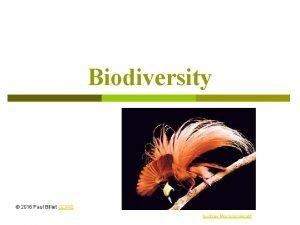 Biodiversity 2016 Paul Billiet ODWS Sydney Morning Herald