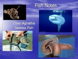 Fish Notes Class Agnatha Jawless Fish General Fish