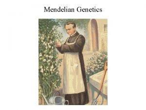 Mendelian Genetics The laws of probability govern Mendelian