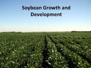 Soybean Growth and Development Outline The soybean plant
