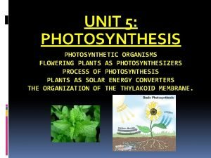 UNIT 5 PHOTOSYNTHESIS PHOTOSYNTHETIC ORGANISMS FLOWERING PLANTS AS