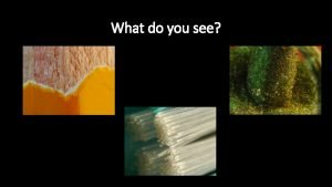 What do you see What do you see