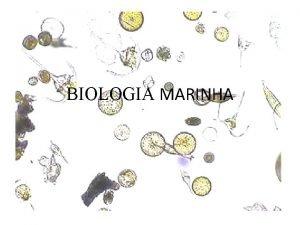 BIOLOGIA MARINHA 1 Biologia Marinha o estudo dos
