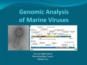 Genomic Analysis of Marine Viruses Tucson High School