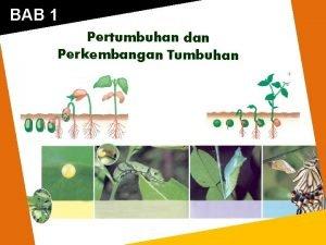 BAB 1 Pertumbuhan dan Perkembangan Tumbuhan A Pendahuluan
