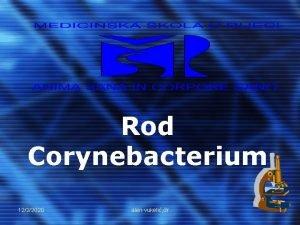 Rod Corynebacterium 1222020 alen vukeli dr 1 Corynebacterium