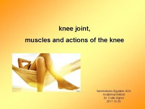 knee joint muscles and actions of the knee