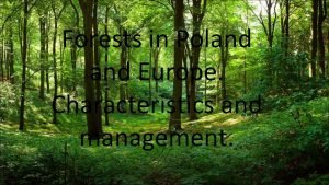 Forests in Poland Europe Characteristics and management Forests