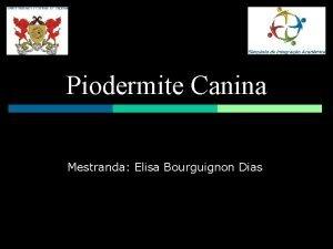 Piodermite Canina Mestranda Elisa Bourguignon Dias Introduo Comum