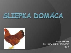 SLIEPKA DOMCA Adrin Jakbek Z ULICA MIERU 20122013