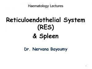 Haematology Lectures Reticuloendothelial System RES Spleen Dr Nervana
