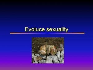 Evoluce sexuality Evoluce Sexuality Sexualita vmna genetick informace