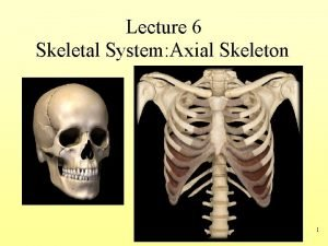 Lecture 6 Skeletal System Axial Skeleton 1 The