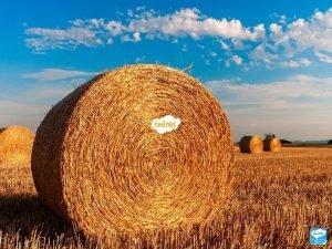 What Is Harvest Harvest is a collection of