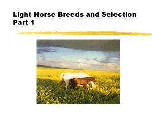 Light Horse Breeds and Selection Part 1 Light