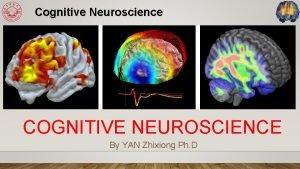 Cognitive Neuroscience COGNITIVE NEUROSCIENCE By YAN Zhixiong Ph