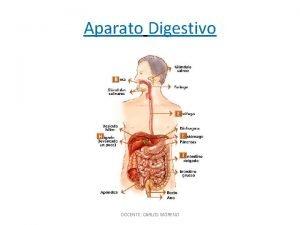 Aparato Digestivo DOCENTE CARLOS MORENO Funciones Principales DOCENTE