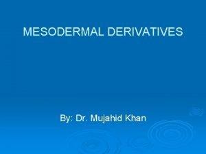 MESODERMAL DERIVATIVES By Dr Mujahid Khan Derivatives Connective