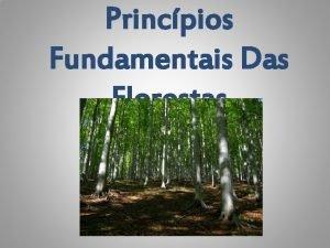 Princpios Fundamentais Das Florestas Declarao Dos Princpios Sobre