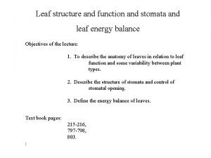Leaf structure and function and stomata and leaf