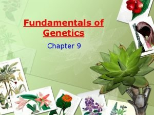 Fundamentals of Genetics Chapter 9 Genetics The field