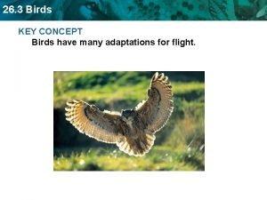 26 3 Birds KEY CONCEPT Birds have many