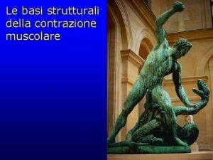 Le basi strutturali della contrazione muscolare muscolo costituito