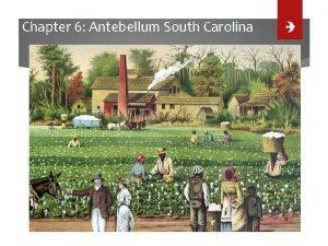 Chapter 6 Antebellum South Carolina Lesson 1 Cotton
