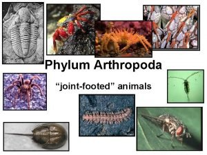 Phylum Arthropoda jointfooted animals Phylum Arthropoda the largest