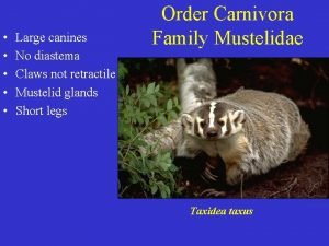 Large canines No diastema Claws not retractile Mustelid