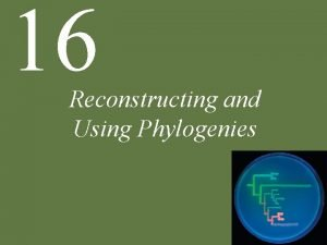 16 Reconstructing and Using Phylogenies Chapter 16 Reconstructing