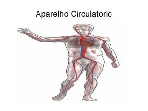 Aparelho Circulatorio Aparelho Circulatorio O sistema circulatrio constitudo