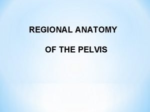 REGIONAL ANATOMY OF THE PELVIS REGIO PERINEALIS REGIO