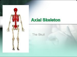 Axial Skeleton The Skull The Skull Two parts