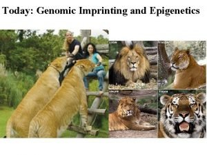 Today Genomic Imprinting and Epigenetics haploid X 23