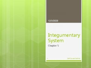 1232020 Integumentary System Chapter 5 1 SAP 2