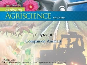 Chapter 18 Companion Animals Copyright 2011 Delmar Cengage