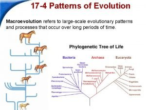 17 4 Patterns of Evolution Macroevolution refers to