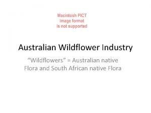 Australian Wildflower Industry Wildflowers Australian native Flora and