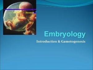 Embryology Introduction Gametogenesis INTRODUCTION Embryology Study of prenatal