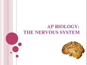 AP BIOLOGY THE NERVOUS SYSTEM DIVISIONS OF THE