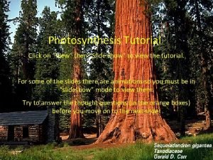 Photosynthesis Tutorial Click on View then Slide show