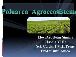Poluarea Agroecosisteme Elev Ardelean Simina Clasa a VIIIa