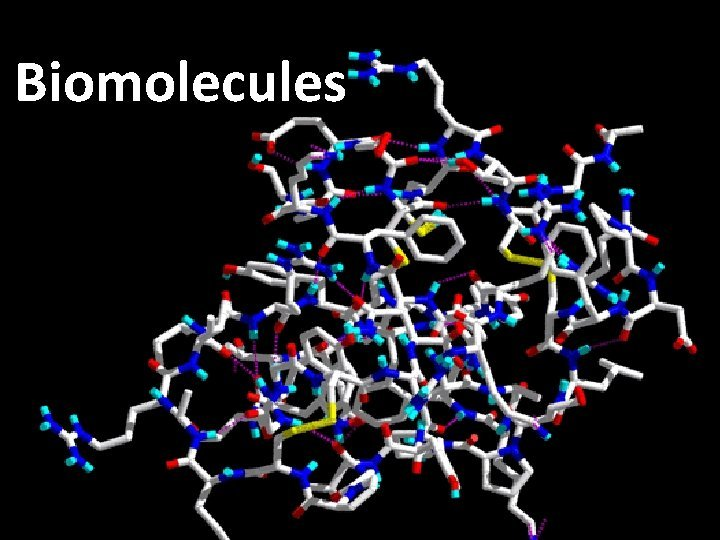 Biomolecules What are the 4 most commonly used