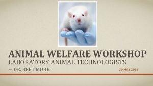 ANIMAL WELFARE WORKSHOP LABORATORY ANIMAL TECHNOLOGISTS DR BERT
