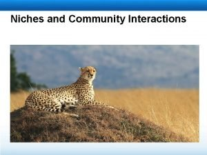 Niches and Community Interactions Learning Objectives Define niche