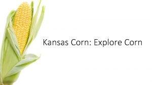 Kansas Corn Explore Corn Lets Play A Game